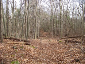 a look down the long trail in late fall