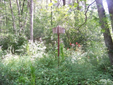 bird houses on hiking trails in Rockland