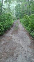 hiking trail in stetson meadows in Marshfield