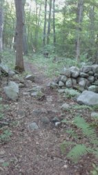 Hiking trail runs through a classic old New England stone wall in the forest at George Ingram Park in Cohasset.