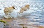 dog beaches at rexhame beach