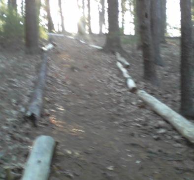 lined trail at ellis nature sanctuary