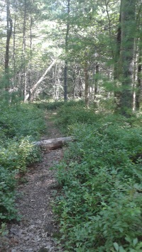 Stetson Trail in Norwell