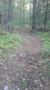 wide trail through forest at white recreation area