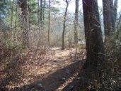 woodsy dog walk trail at ames nowell