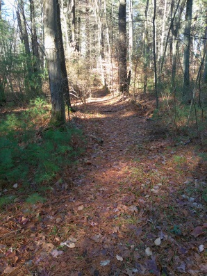 Hiking trail to Indian Trail cul de sac in Hanson Veterans Memorial Town Forest.