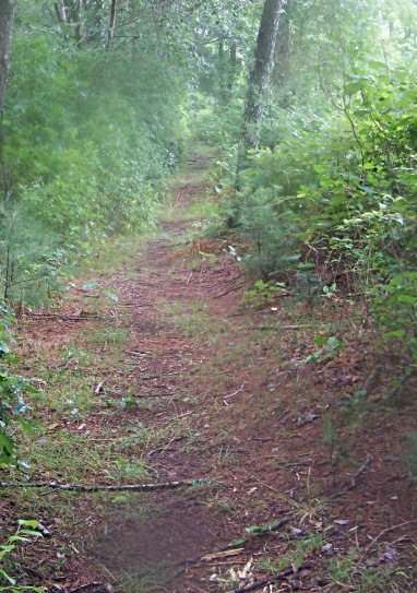 more narrow trail at far end of south river trail