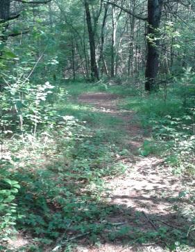 shady path in misty meadow conservation in Pembroke