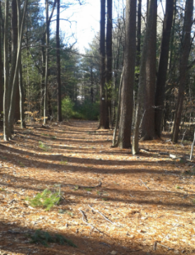 wide easy and marked hiking trail at two mile farm in marshfield