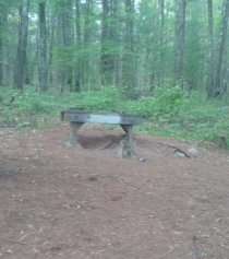 sturdy resting area at tuckers preserve