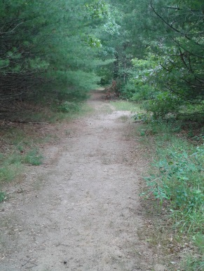 Sandy trail leading down to silver lake at it's sanctuary