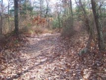 trail at cranberry pond