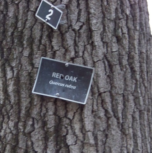 signage marking tree varieties at great brewster woods
