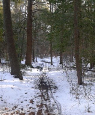 trail leading over a plank bridge in Hanover