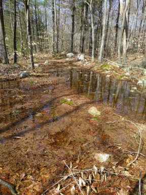 early spring wet twin ponds trail