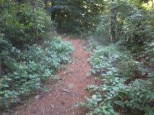 side trail in Wheelwright Park