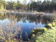 pond behind bog at ellis sanctuary