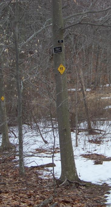 tree identification in great brewster woods