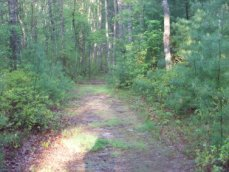 hiking trail at camp wing conservation area