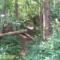 small side trail in george washington forest