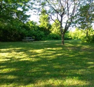 Grassy picnic area at Webb Memorial Park.
