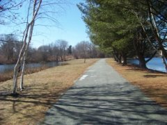 walkway lined by eastern white pines on colebrook blvd