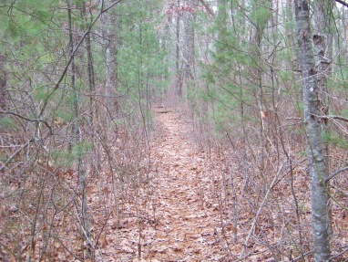 narrow path at crowell conservation area