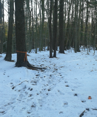 orange ties and markers at melzar hatch reservation