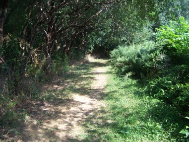 meadow trail in summer