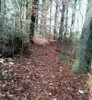 Narrow trail parallel to the pond in Hanson Town Forest.