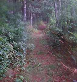 trail along the southern side of the south river bogs