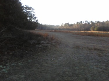 road around cranberry bog at crowell conservation
