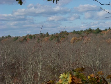 view in fall at observation tower in willow brook farm