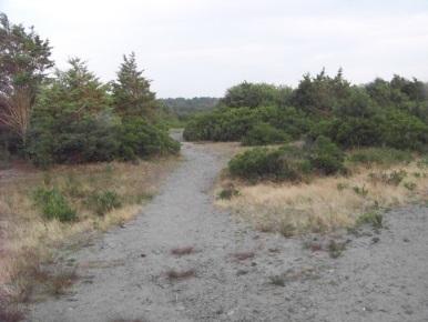 wide sandy trail at rexhame beach