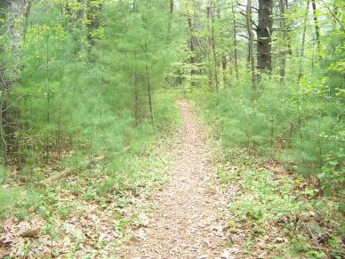 narrow trail loop in willow brook farm