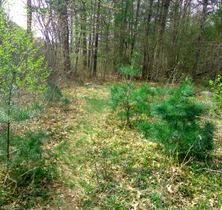 meadow like path leading out across a utility line