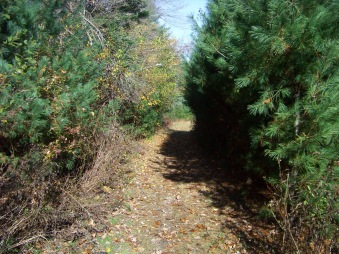 clark bog trail