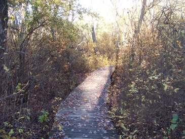 boardwalk in fall at colby phillips conservation