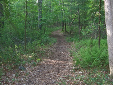hiking trail through hatch lots in norwell