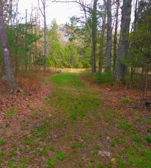 Alternate trail across a power line.