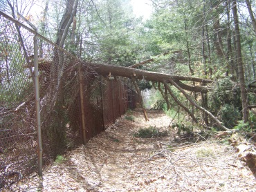 downed tree over fireworks trail