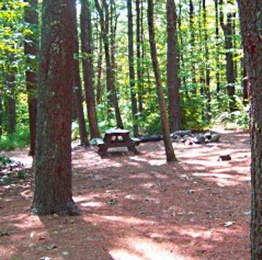 Shady campsite at Wompatuck State Park