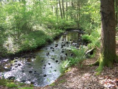stream in Hatch Lots