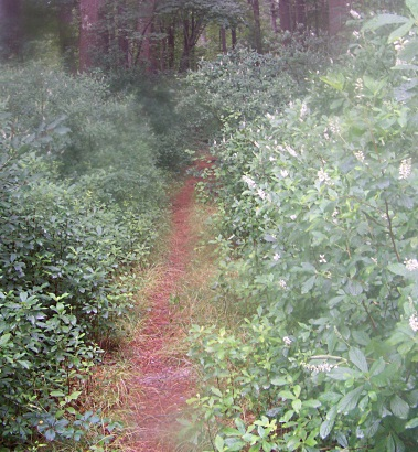 narrow trail out to duxborough trail