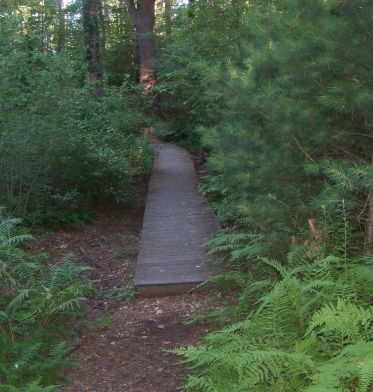 boardwalk trail at jacobs pond