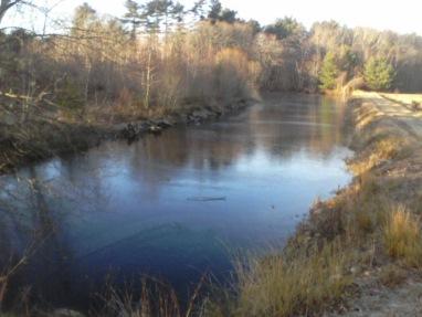 pond behind cranberry bog at crowell conservation