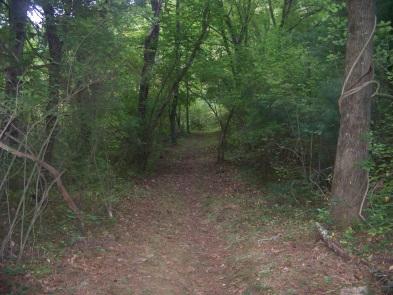 Salt Marsh Trail at Stetson Meadows