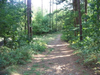 trail starts of open up and become grassy at george washington forest