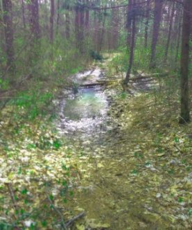Large pools of water on the trail