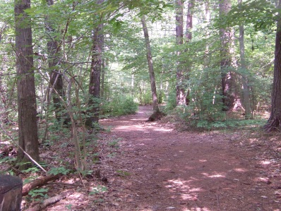 ingeno hiking trail in rockland